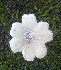 お花きのこ上から17.8.23.jpg
