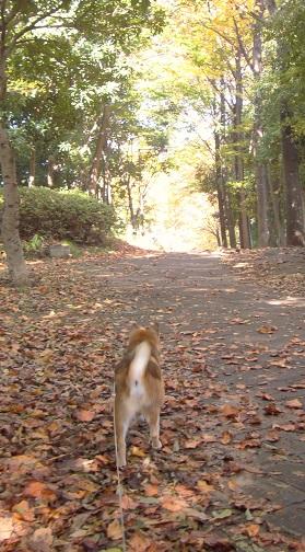 むー散歩17.11.3.jpg