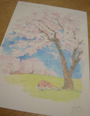 桜と柴17.4.13.jpg