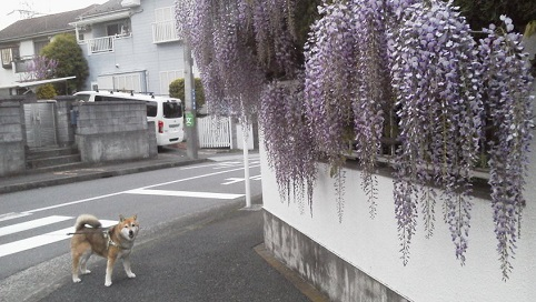 藤とむーちゃん17.4.21.jpg