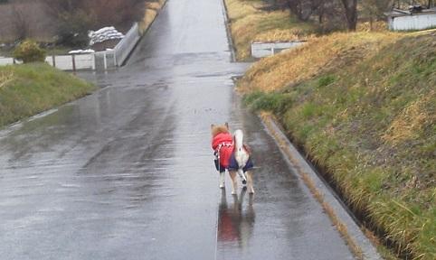 雨の散歩17.3.21.jpg