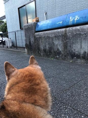 むーちゃんと猫ちゃん①18.9.1.jpg