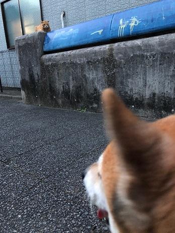 むーちゃんと猫ちゃん②18.9.1.jpg