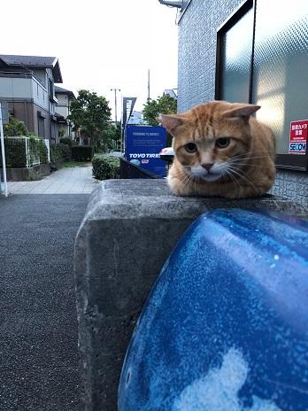 猫ちゃん18.9.1.jpg
