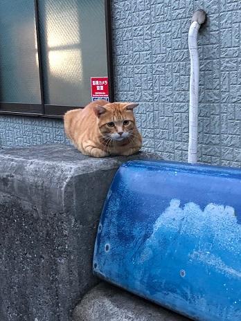 猫ちゃん②18.9.1.jpg